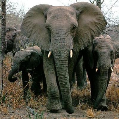 Damn, elephants are awesome.